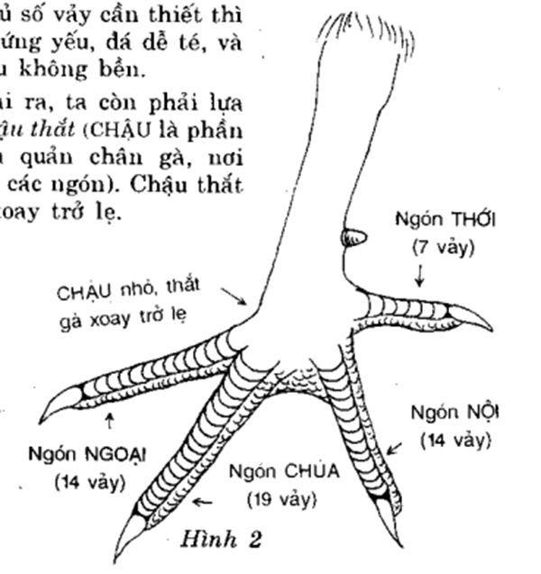 cac-bo-phan-phan-chan-con-ga