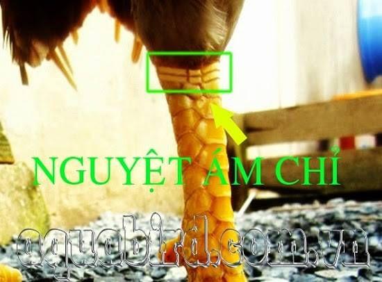 vay-nguyet-am-chi