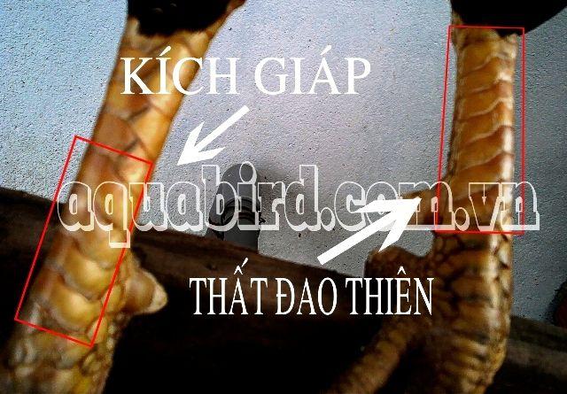 vay_kich_giap-that-dao-thien