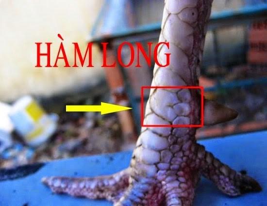 vay-ham-long