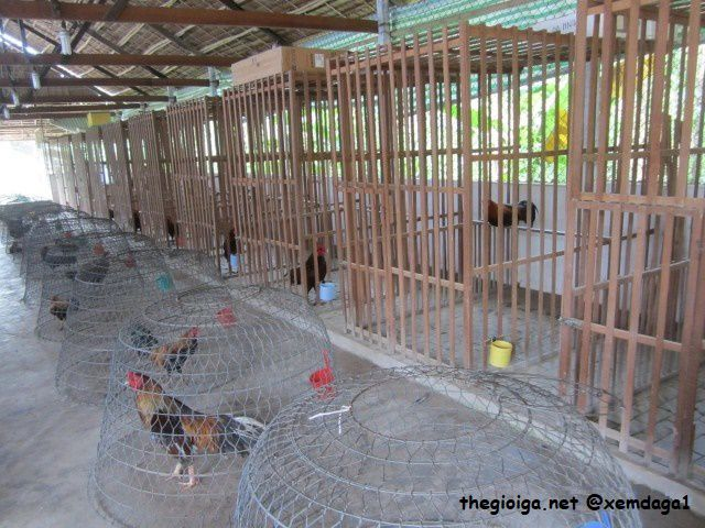 làm chuồng gà bằng gỗ