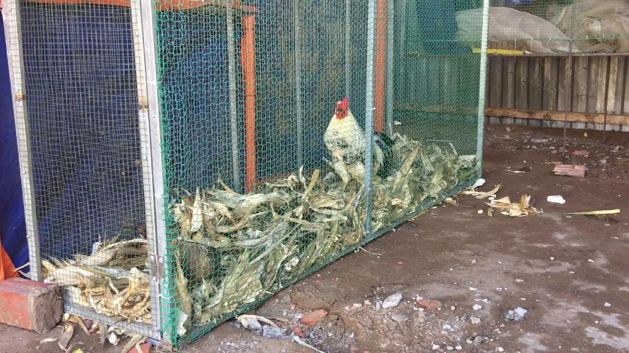 cách làm chuồng gà bằng lưới